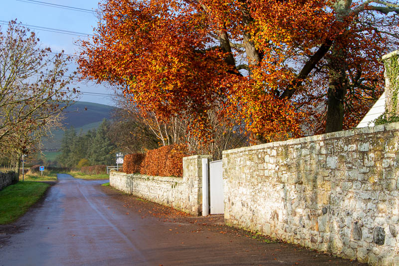 street view of autumn leaves in Branton