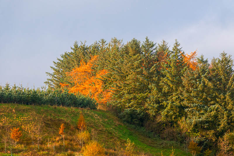 landscape view of autumn leaves at Powburn