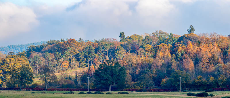 panorama of autumn leaves at Hedgeley