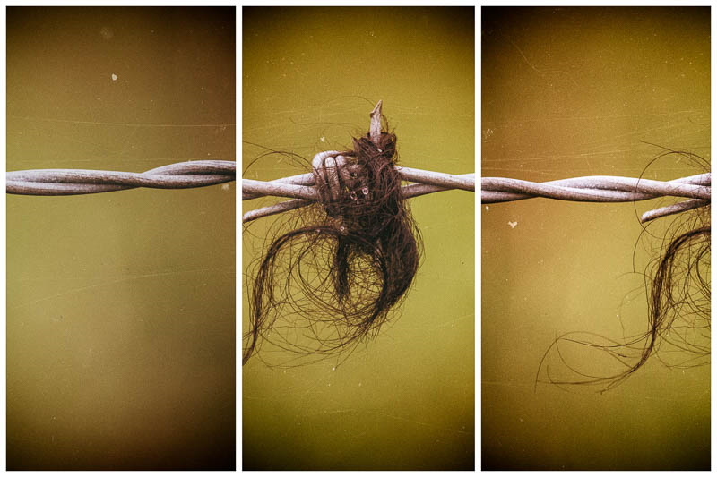 multi view image of sheep's wool on barbed wire