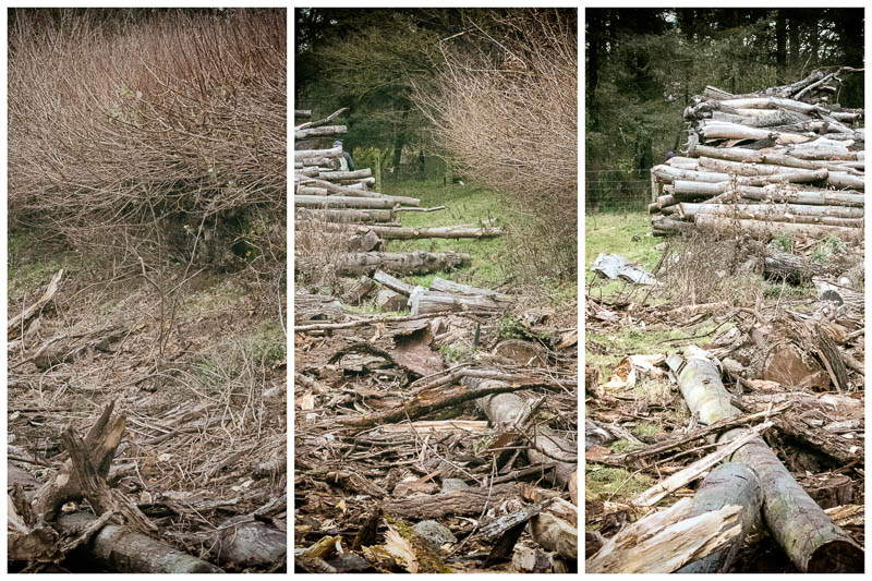multi view image of destroyed log pile
