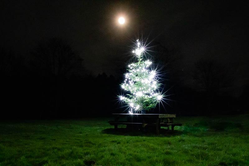 night shot of lit Christmas tree