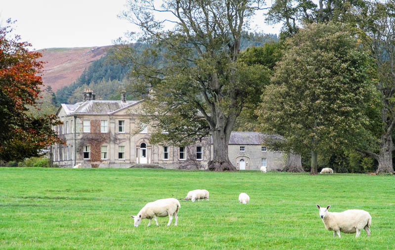 Photo of Shawdon Hall looking across a field with grazing sheep