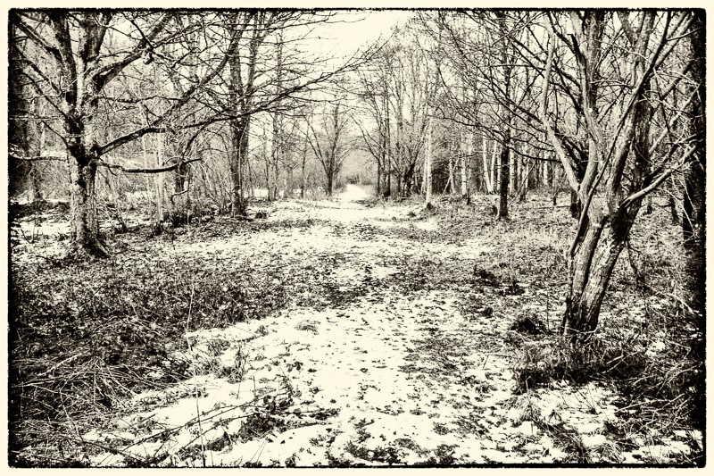 Monochrome photo of snow in Crawley Dene