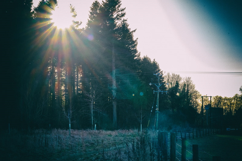 Photo of sun shining over tops of tall evergreen trees