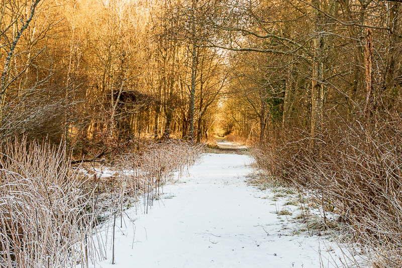 Photo of golden light  along a woodland path