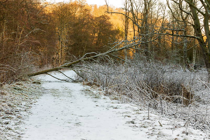 Photo of fallen tree blocking woodland footpath