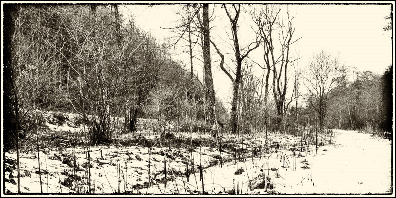 Photo of snow-covered Crawley Dene