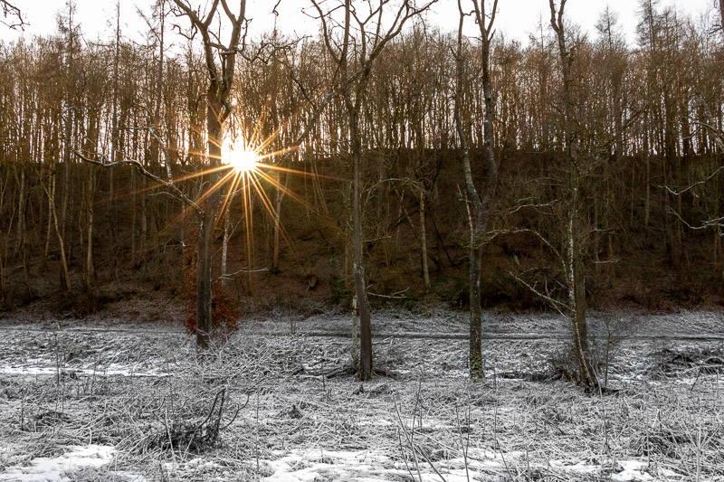 Photo of sun shining through trees along a woodland path