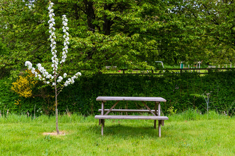 Photo of tree in blossom next to garden bench