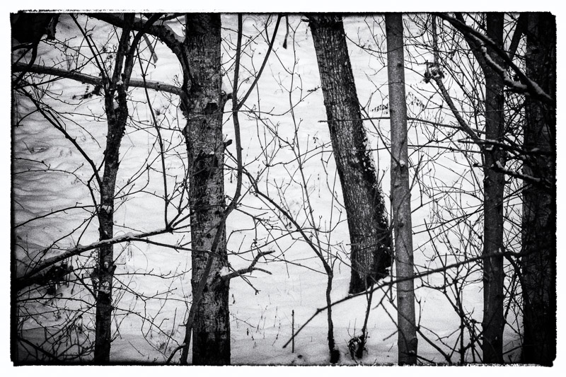 High contrast black and white photo of tangled branches in woodland