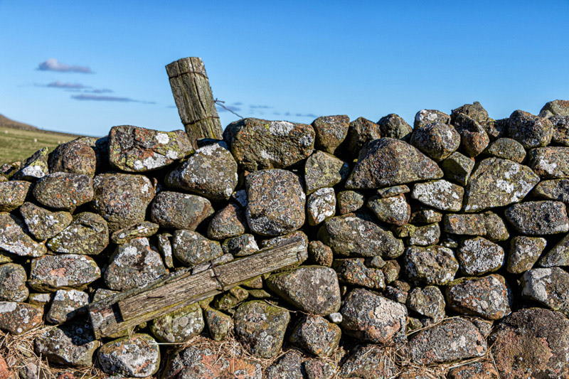 Photo of old fence posts sticking out of a drystone wall
