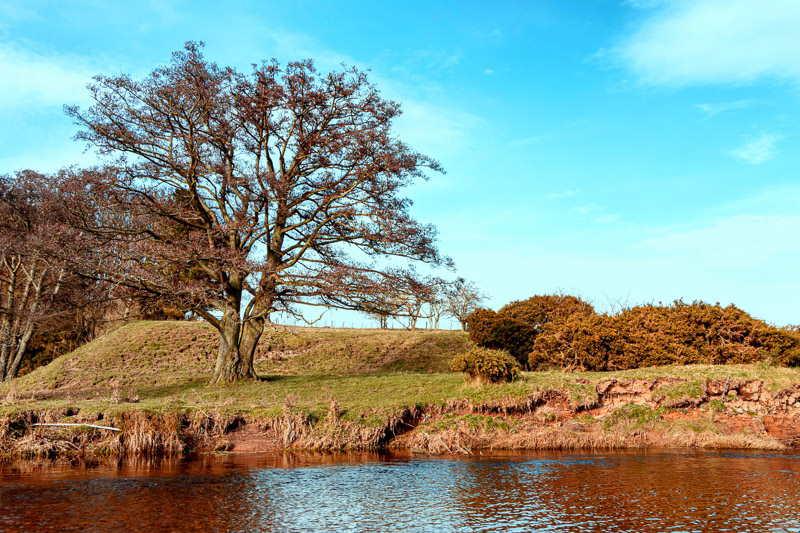 Photo of tree along a river bank