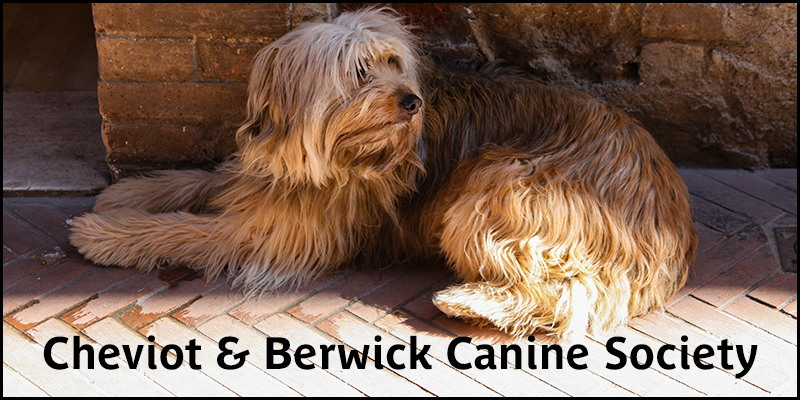 Photo of long haired dog lying down overlaid with the words 'Cheviot & Berwick Canine Society'