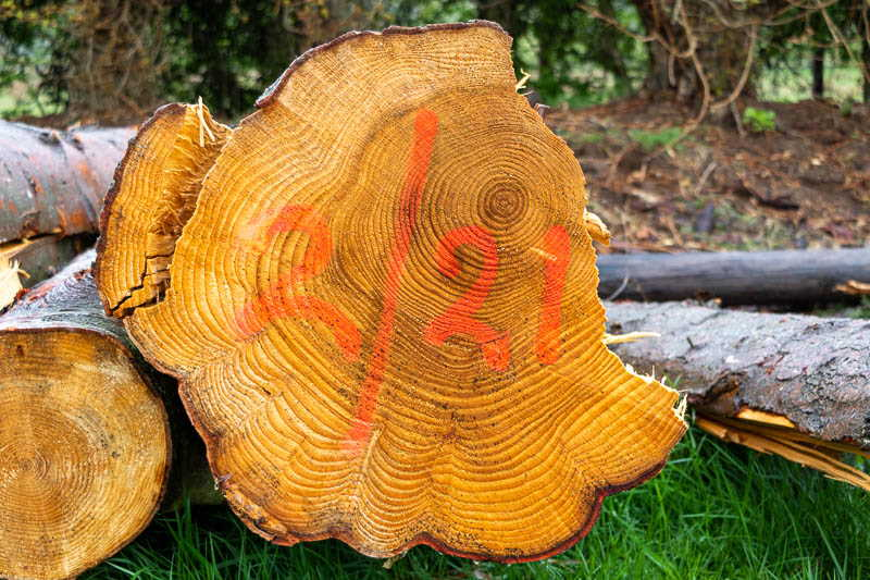 Photo of oak log with numbers 2/21 painted on it