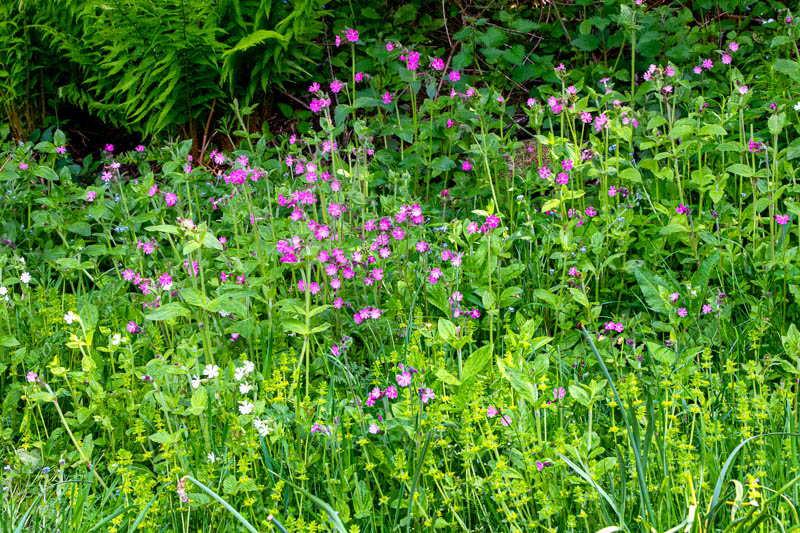 Photo of border of wild flowers
