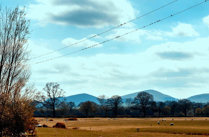 Photo of birds on telephone wire in front of Cheviot Hills