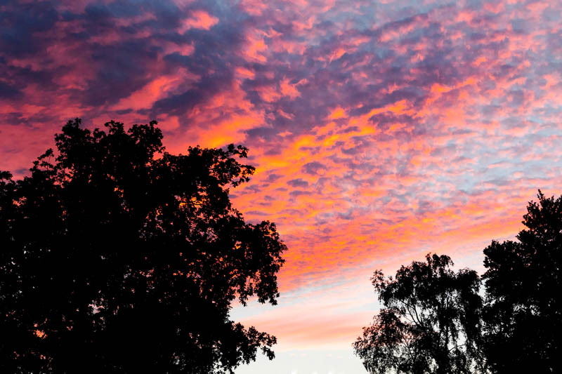 Colour photo of sunset over two trees in Northumberland