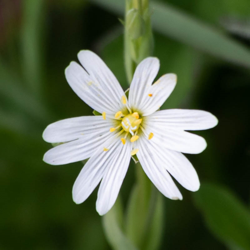 Close-up photo of white flower, showing centre parts