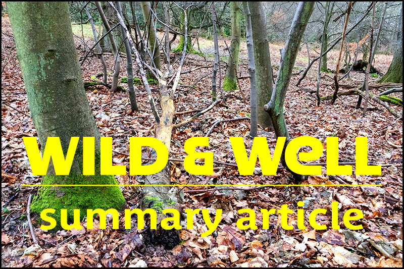 Photo of woodland overlaid with the words 'Wild and well: summary article'